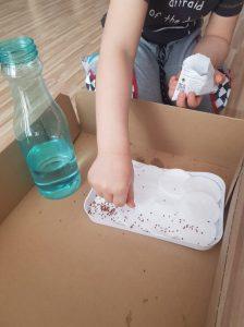 Ręka chłopca sypie nasiona rzeżuchy na wyłożoną watą tackę obok stoi butelka wodą.